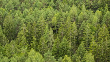 picjumbo_green_green_forest_trees